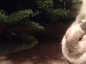Babs the house rabbit next to our Christmas tree